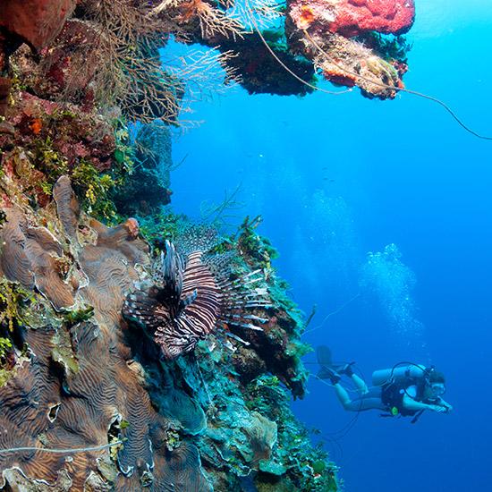 scuba-divers-reef