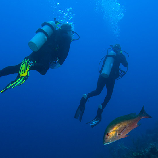 scuba-divers-and-fish