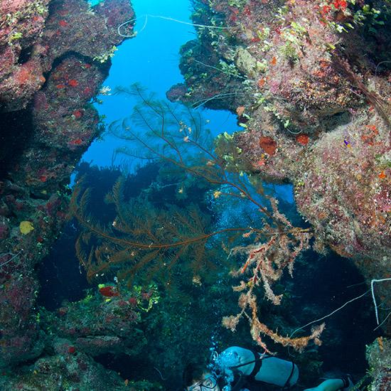 underwater-reef